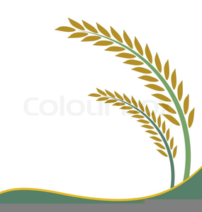 Free plant images at. Rice clipart rice seed