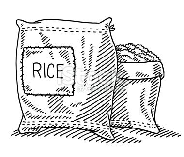 Rice clipart sketch. Hand drawn vector drawing