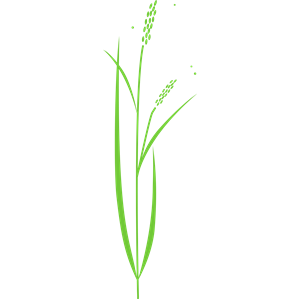 Rice clipart svg. Plant cliparts of free