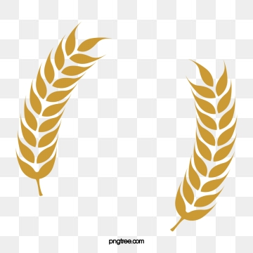 Wheat clipart wheat product. Rice paddy png vector