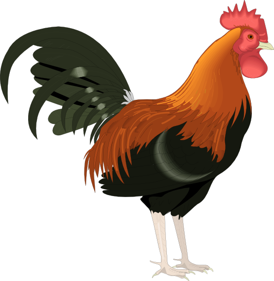 Monkeys clipart chicken. Rooster clip art cartoon