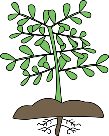 Roots clipart. Plant with clip art