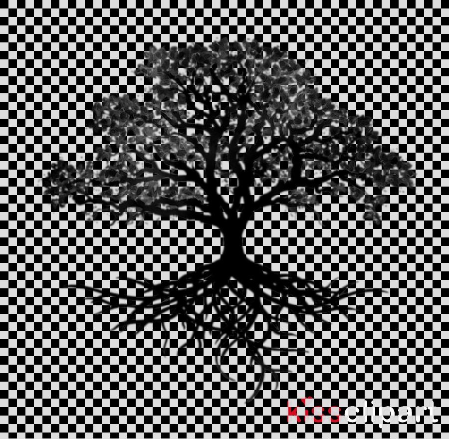 Roots clipart oak tree, Roots oak tree Transparent FREE ...