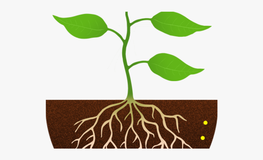 Stem with . Roots clipart plant root
