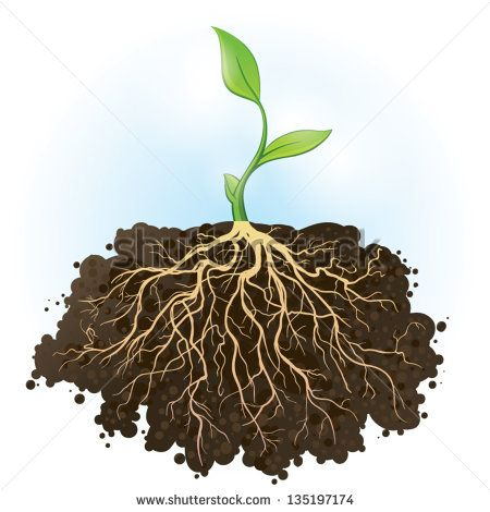 Roots clipart plant root. Young green with strong