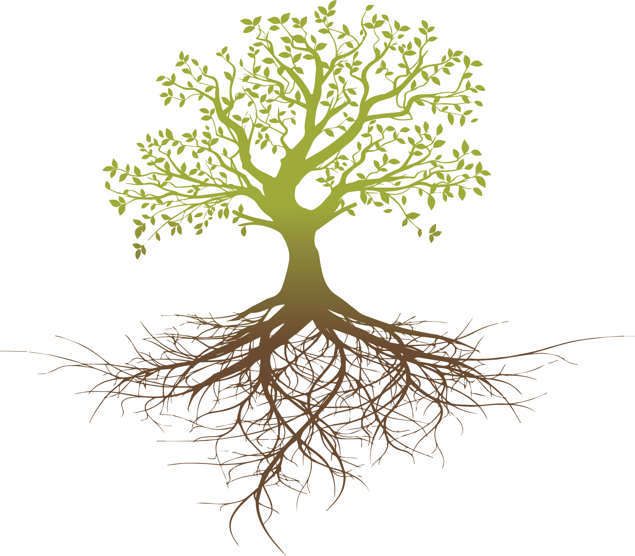 Roots clipart root system. Tree oak thinking png