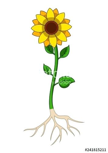 Roots clipart root system. Flower with sahujodi com