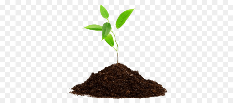 Seedling clipart root. Tree plants agriculture transparent