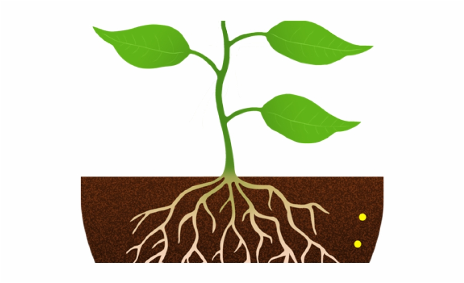 Free black and white. Seedling clipart root