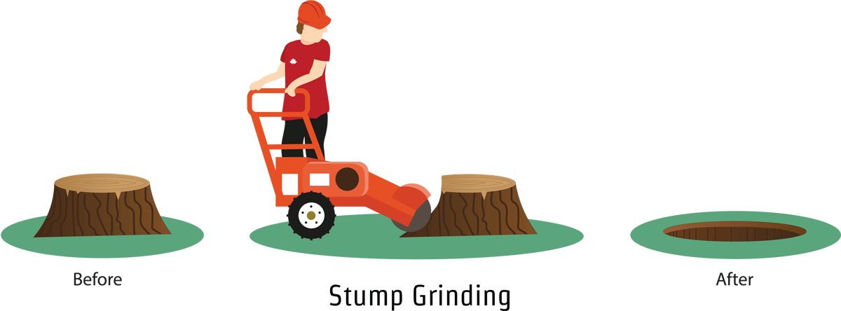 Tree removal hampshire new. Roots clipart stump grinding