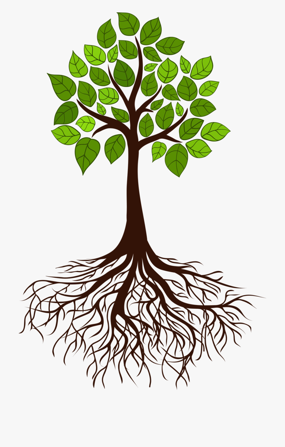 Roots clipart transparent tree leave. With free cliparts on
