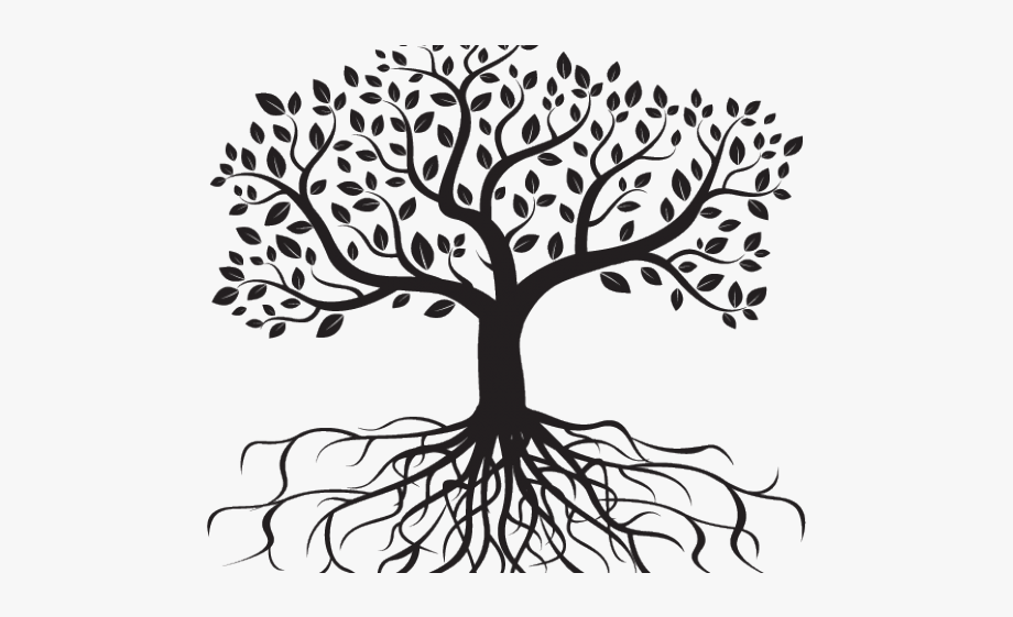 Drawn leaf drawing . Roots clipart transparent tree leave