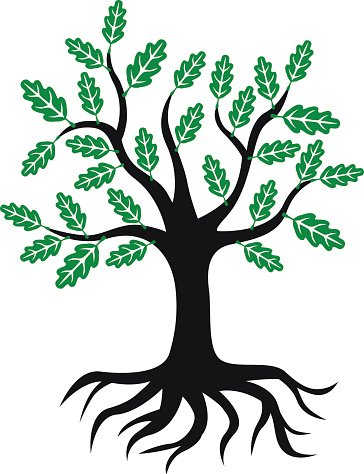 Roots clipart tree icon. Oak with green leaves