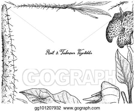 Roots clipart tuberous. Eps illustration hand drawn