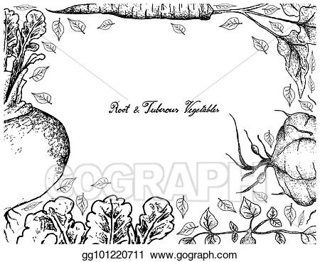 Eps illustration hand drawn. Roots clipart tuberous