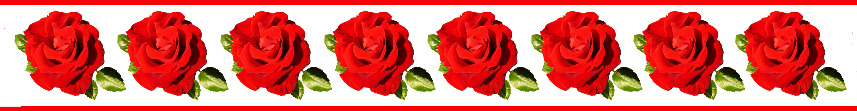And frames red rose. Flower borders png