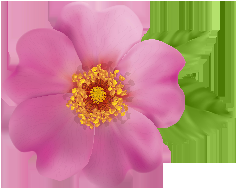 Wild flower png. Rose clip art image