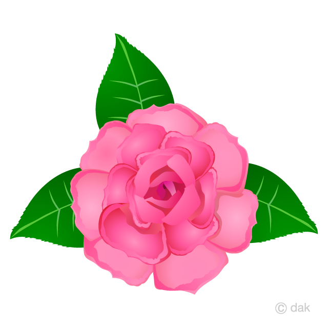 Rose clipart blossom. Pink flower free picture