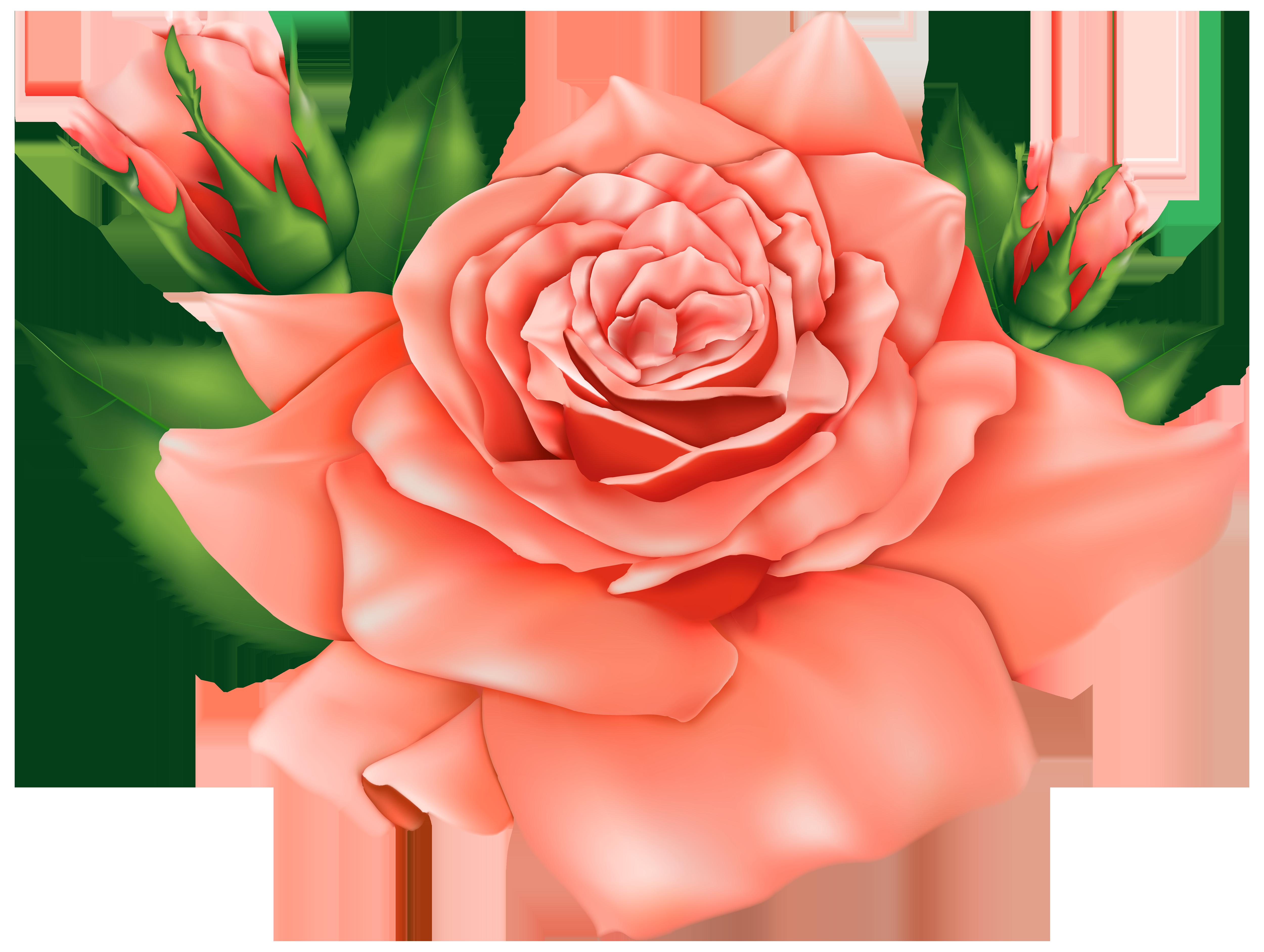 Orange roses png image. Rose clipart cross