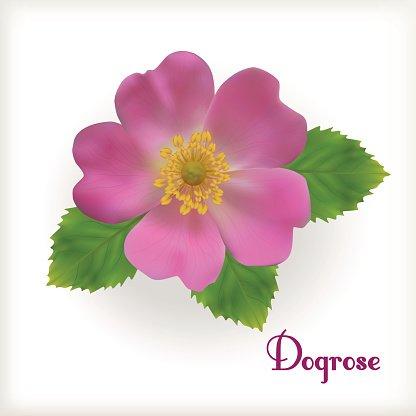 Flower premium clipartlogo com. Rose clipart dog