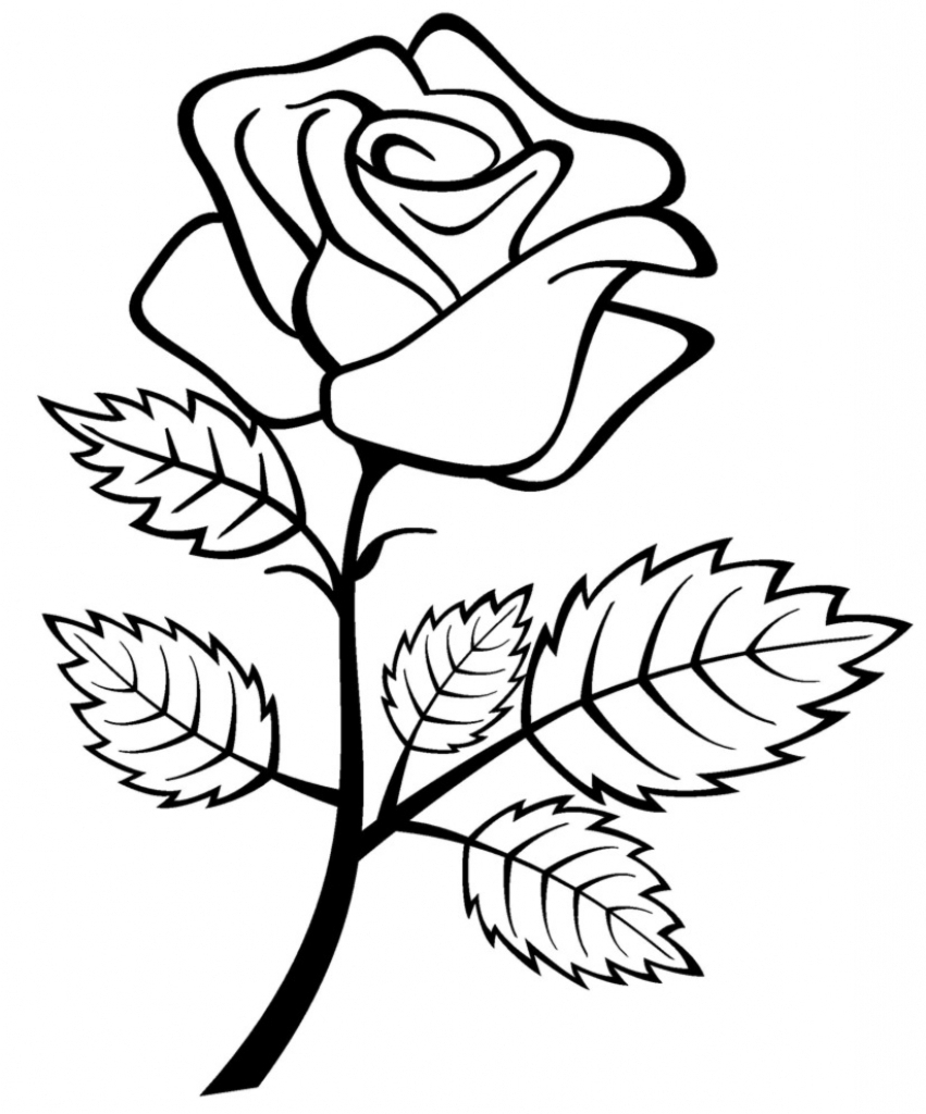 Flower drawing free download. Rose clipart drawn