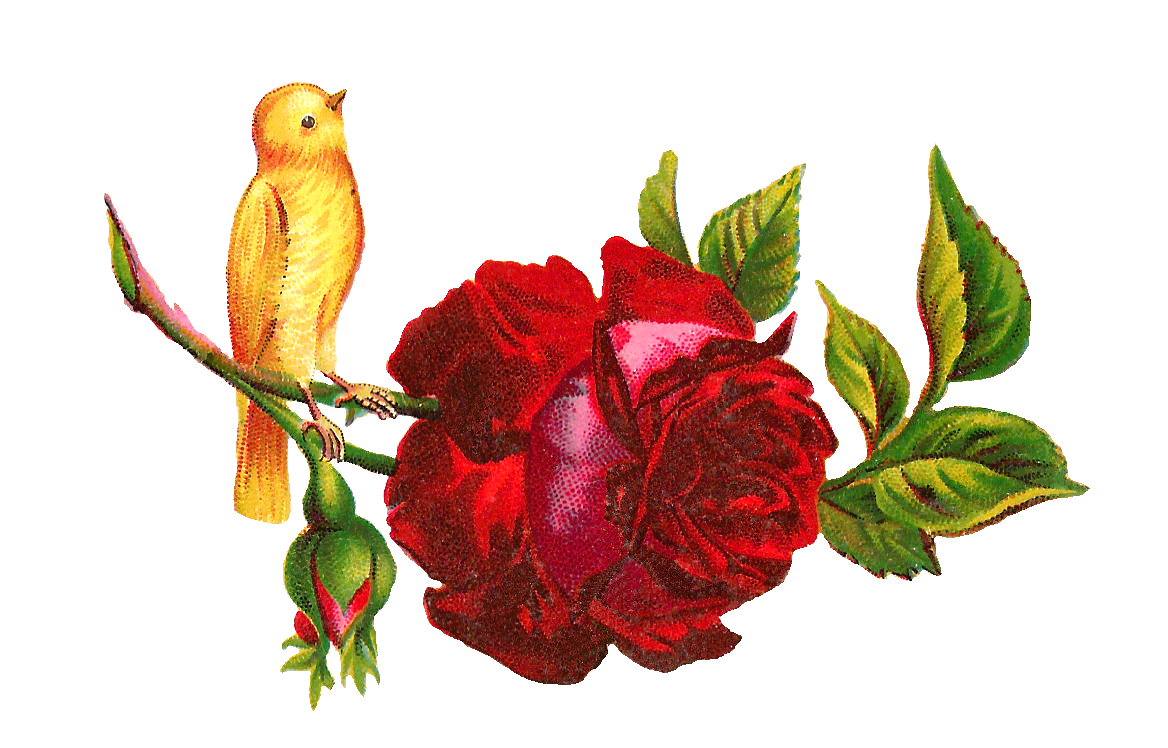 Red yellow free pnglogocoloring. Rose clipart head