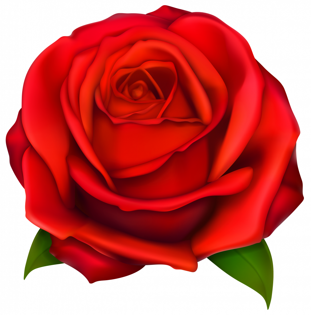 Clipart roses head. Simple rose free download