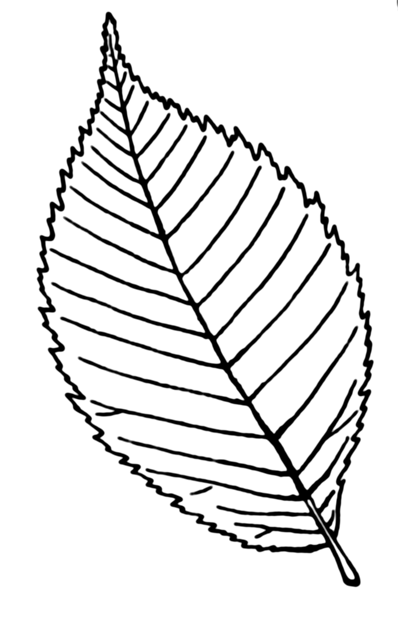 Rose clipart leaf. Drawing of library clip