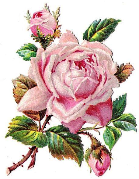 Vintage roses scrap flowers. Rose clipart mini rose