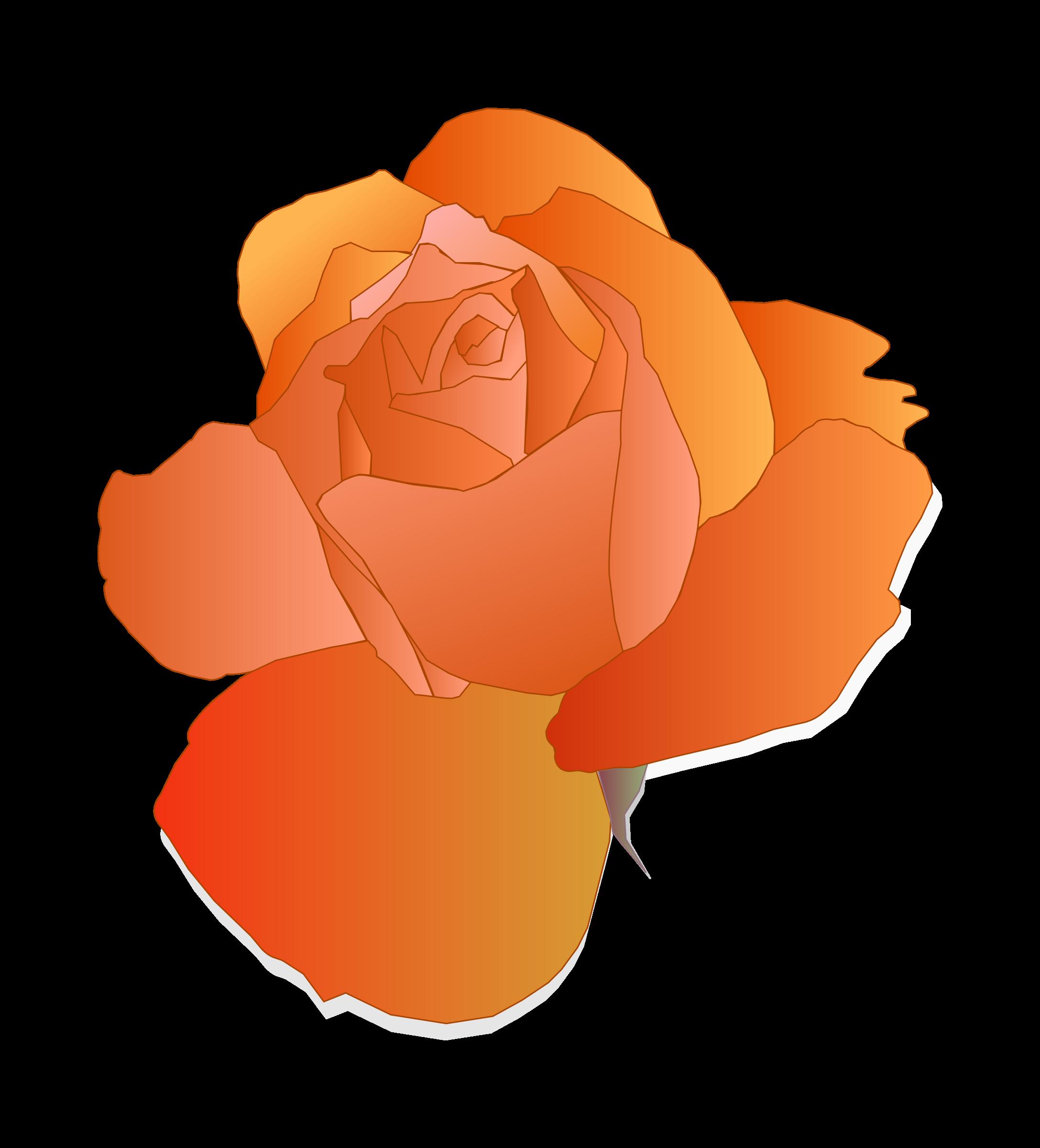 Rose clipart peach rose. Orange