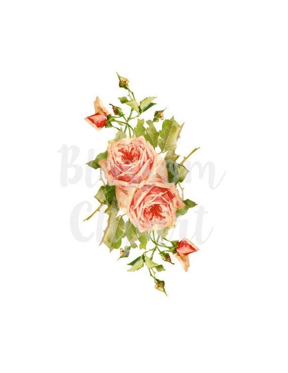 Roses vintage illustration . Rose clipart shabby chic
