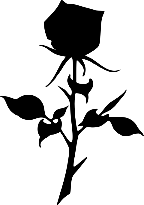 Png free images toppng. Rose clipart silhouette