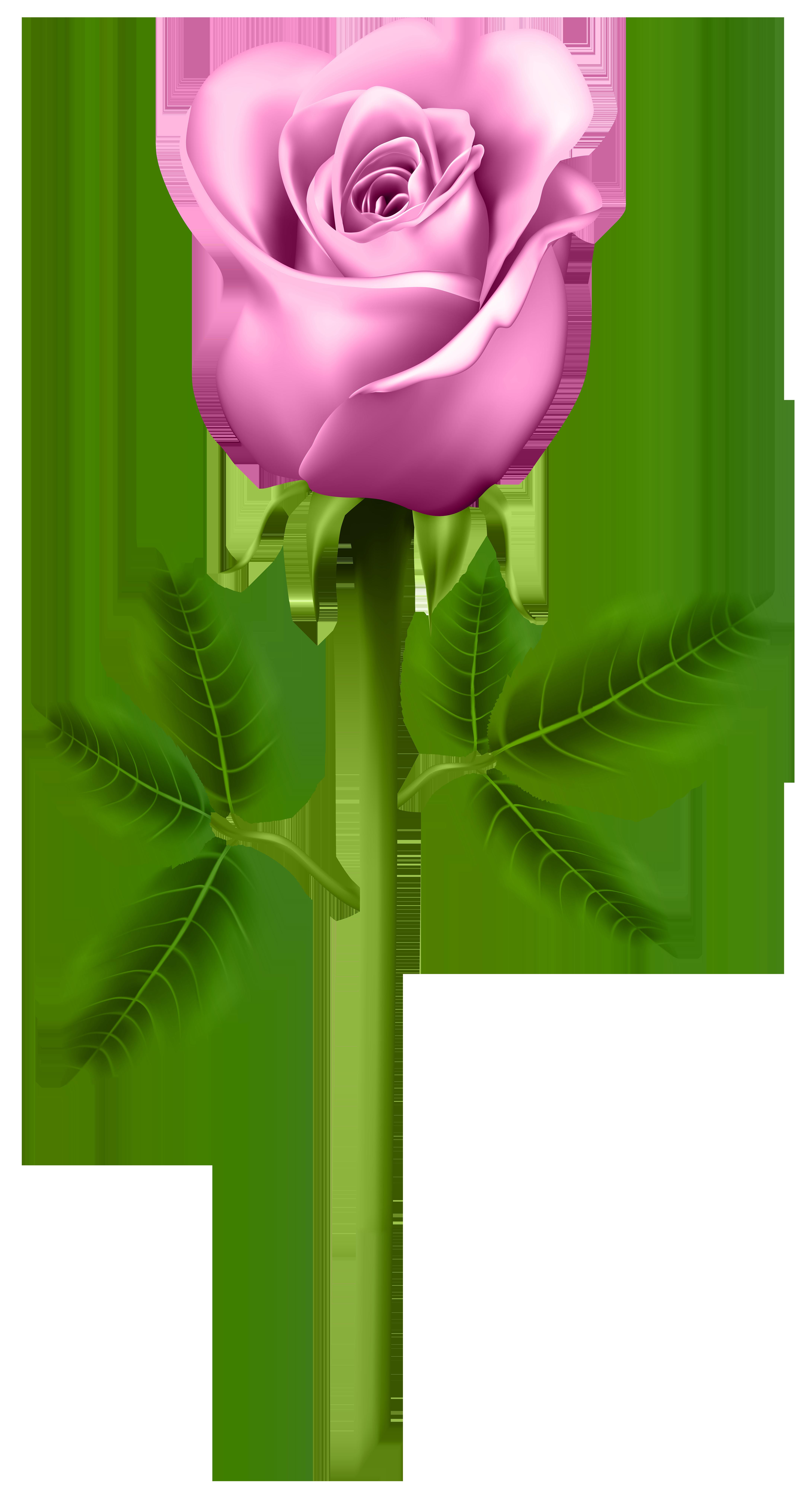 Pink transparent png image. Rose clipart stick