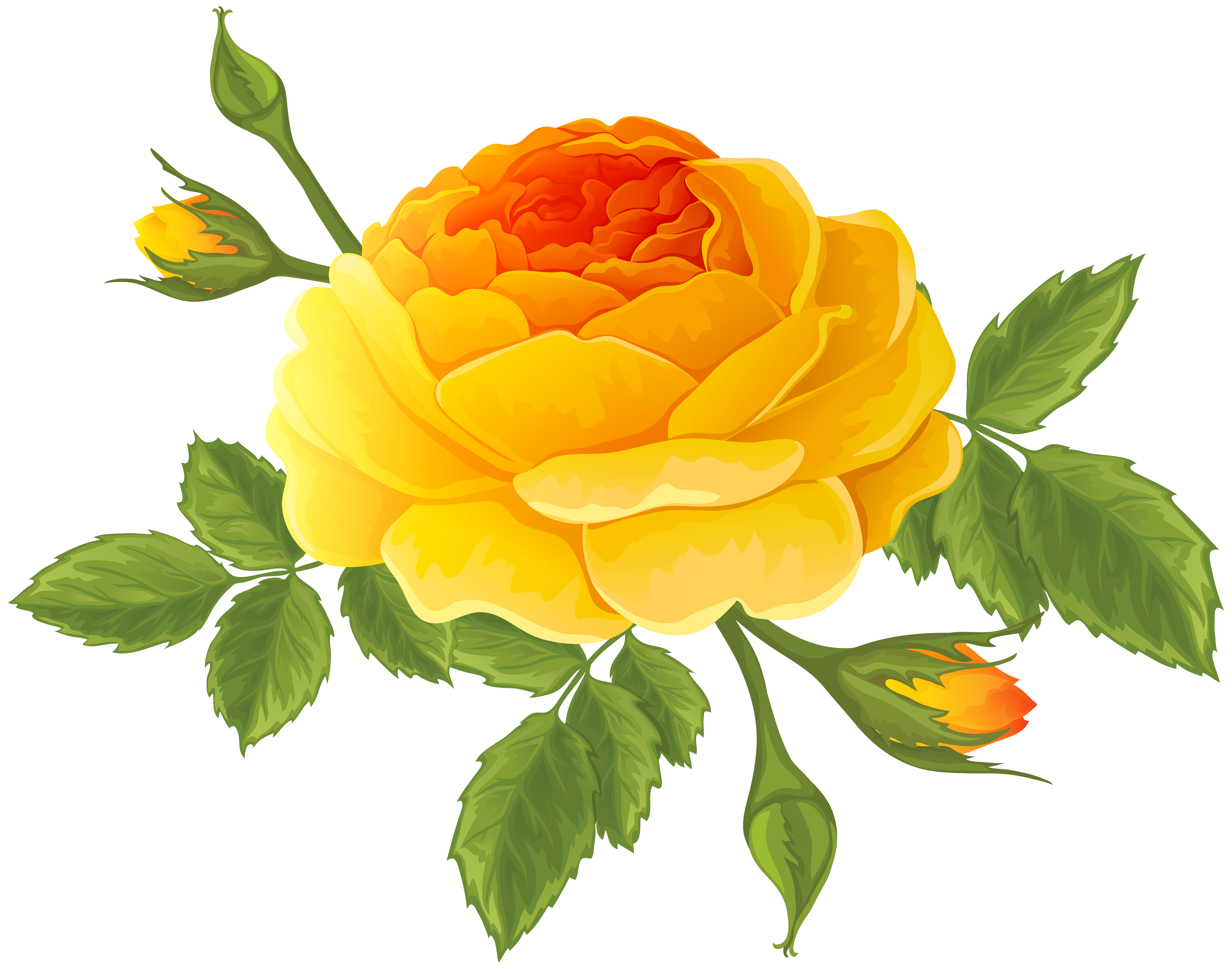 Orange with buds png. Rose clipart stick