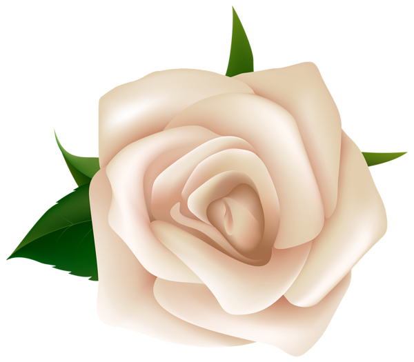 Png image gallery yopriceville. White clipart rose