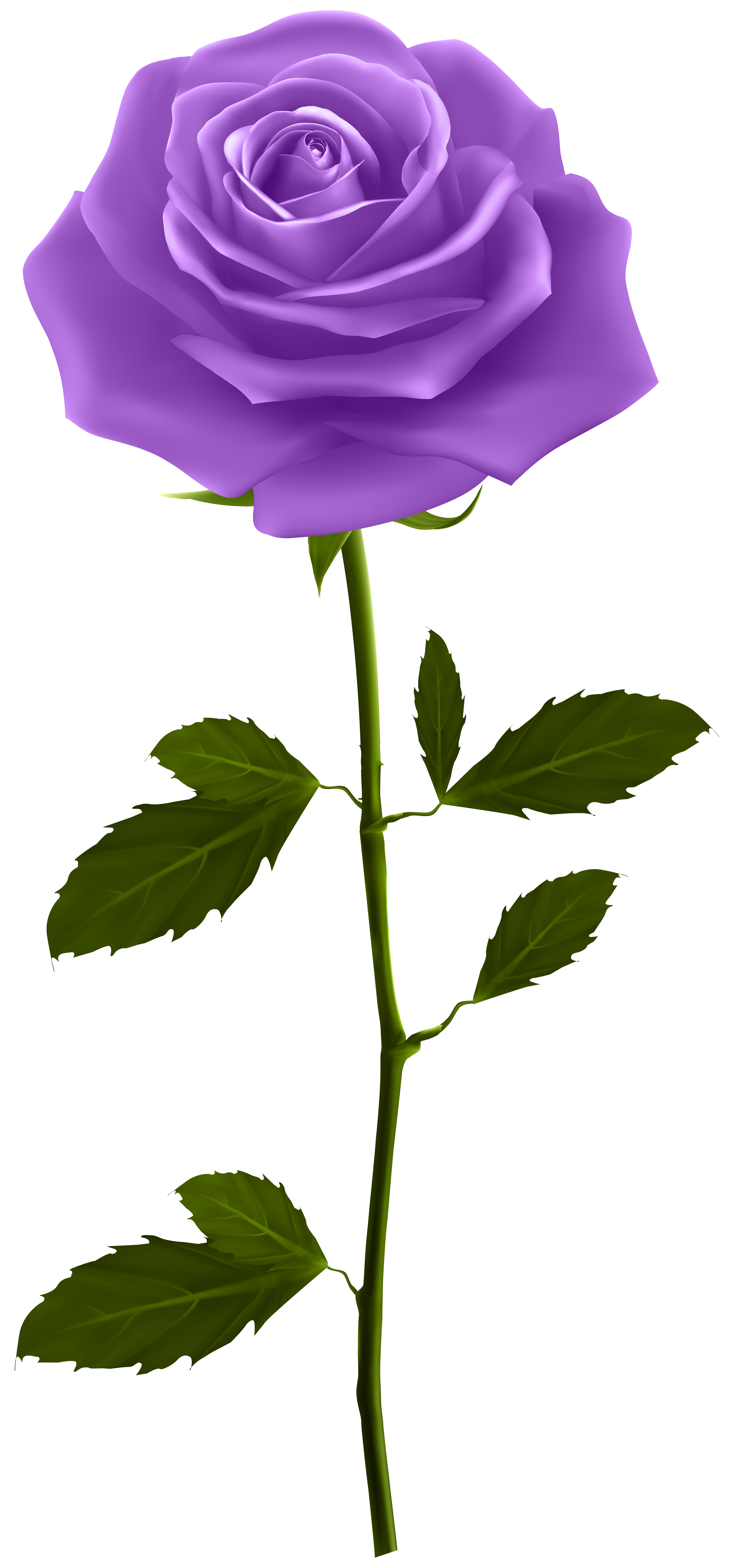 Rose clipart stick. Purple with stem png