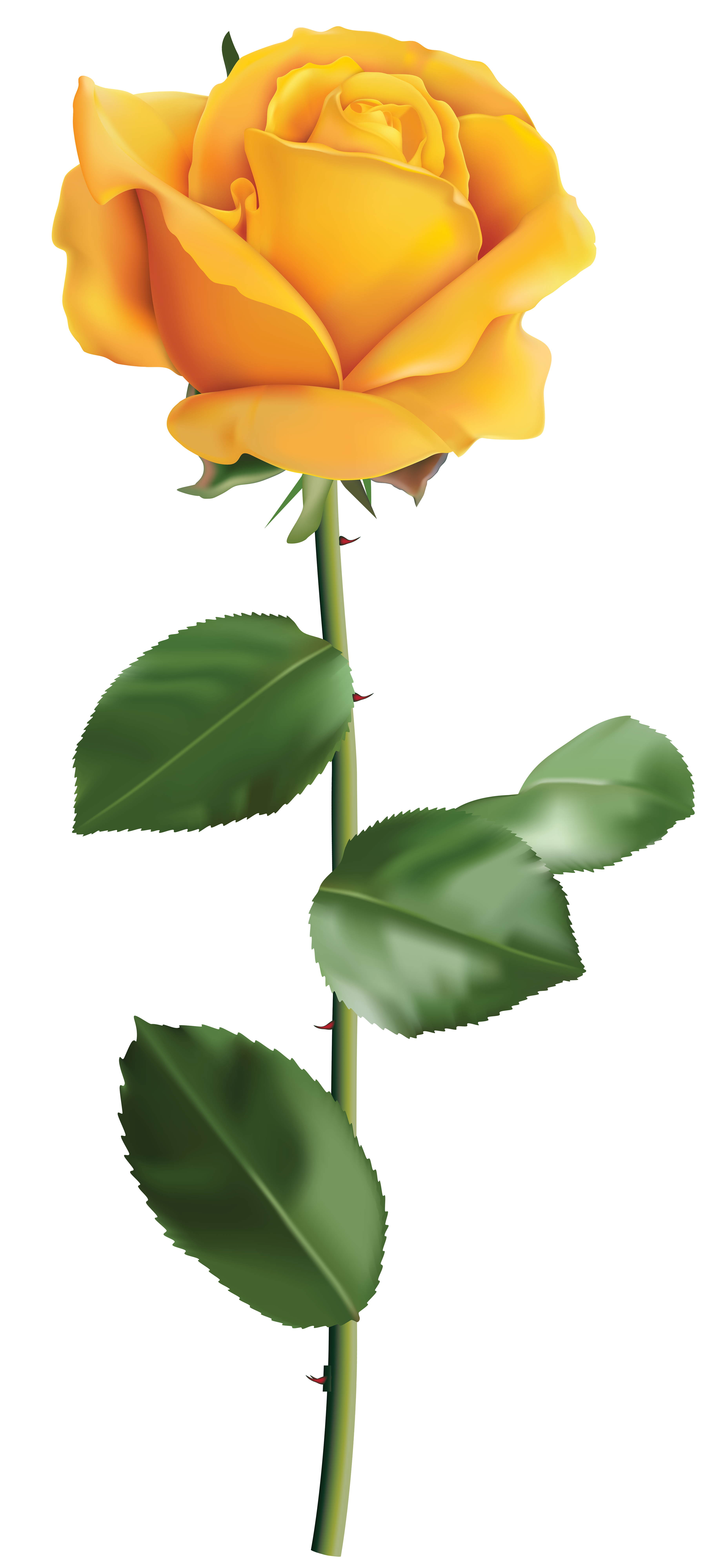 rose clipart yellow rose