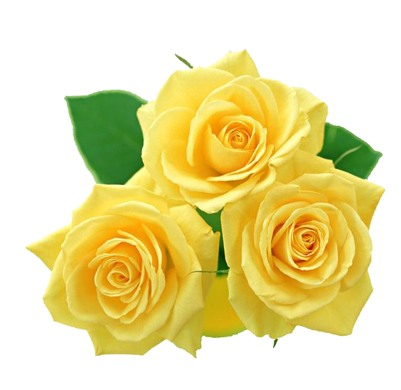 Rose clipart yellow rose. By yotoots on deviantart