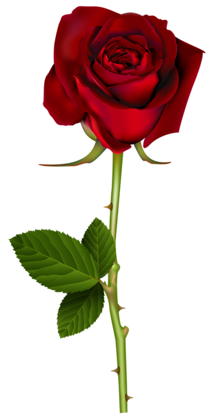 Red png transparent image. Clipart rose natural