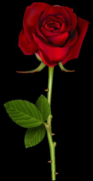 Rose flower png. Red transparent image i