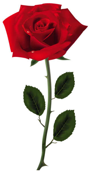 Red art picture clipart. Rose png images