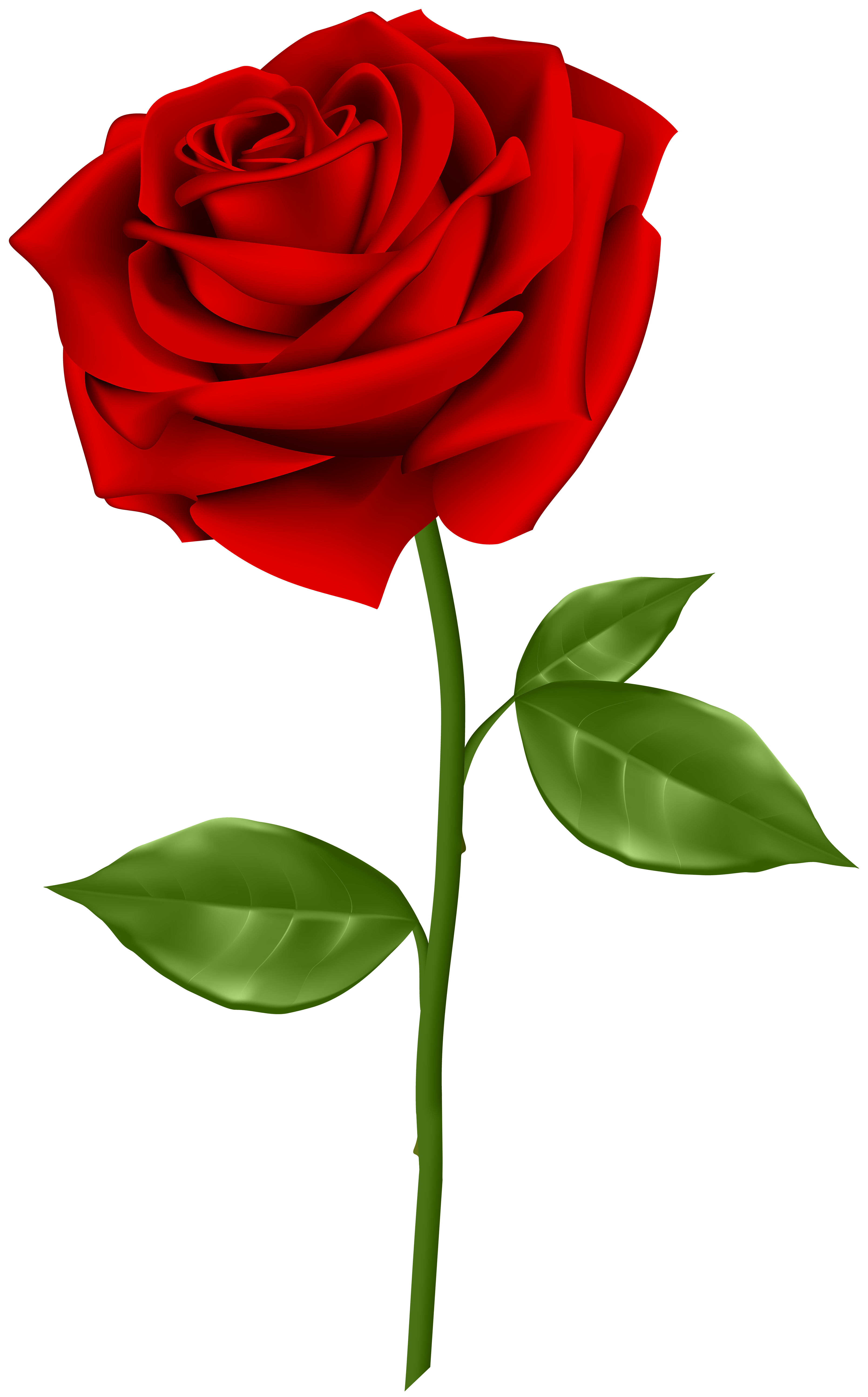 Rose png images. Red transparent clip art