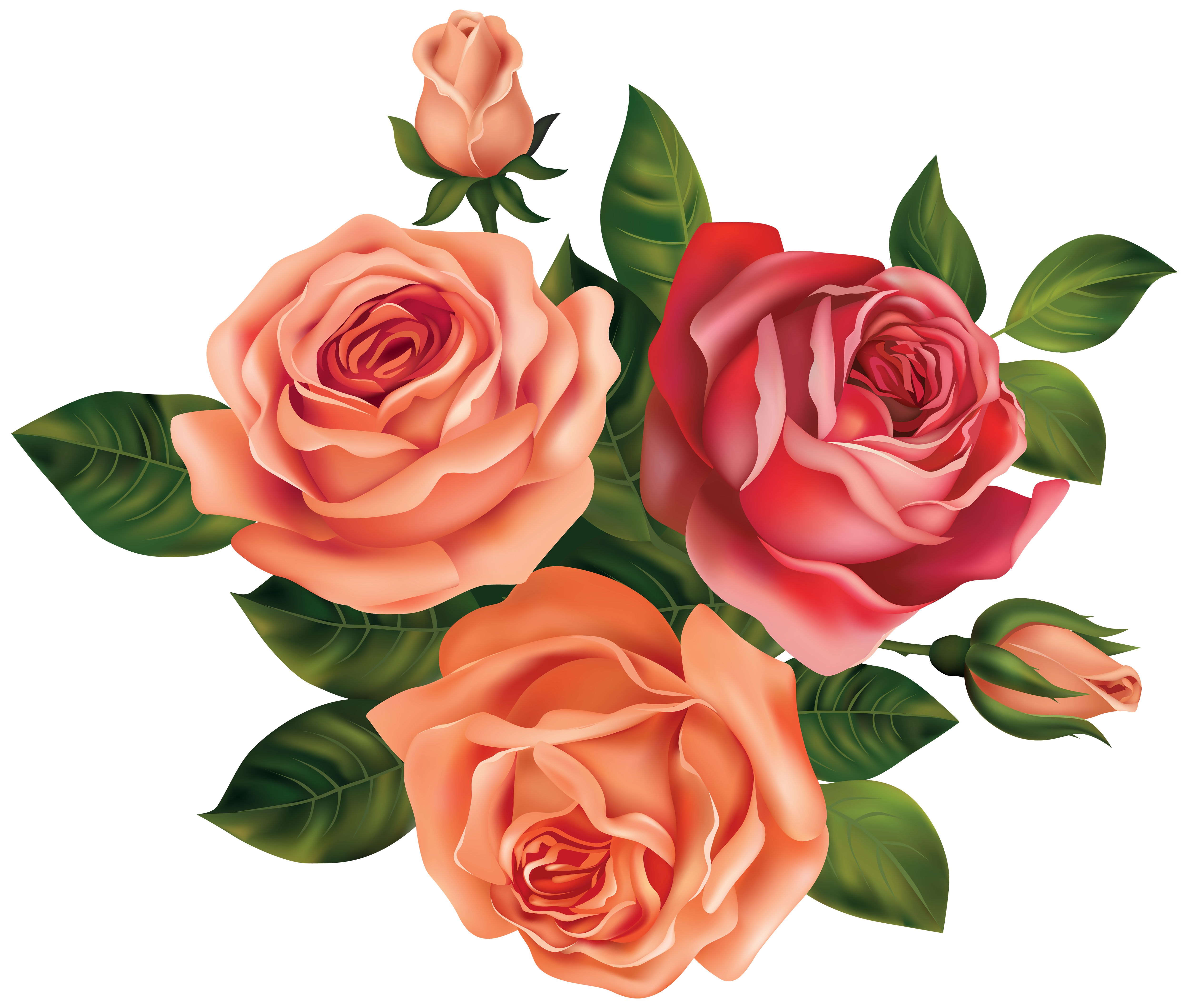 Beautiful image gallery yopriceville. Clipart roses