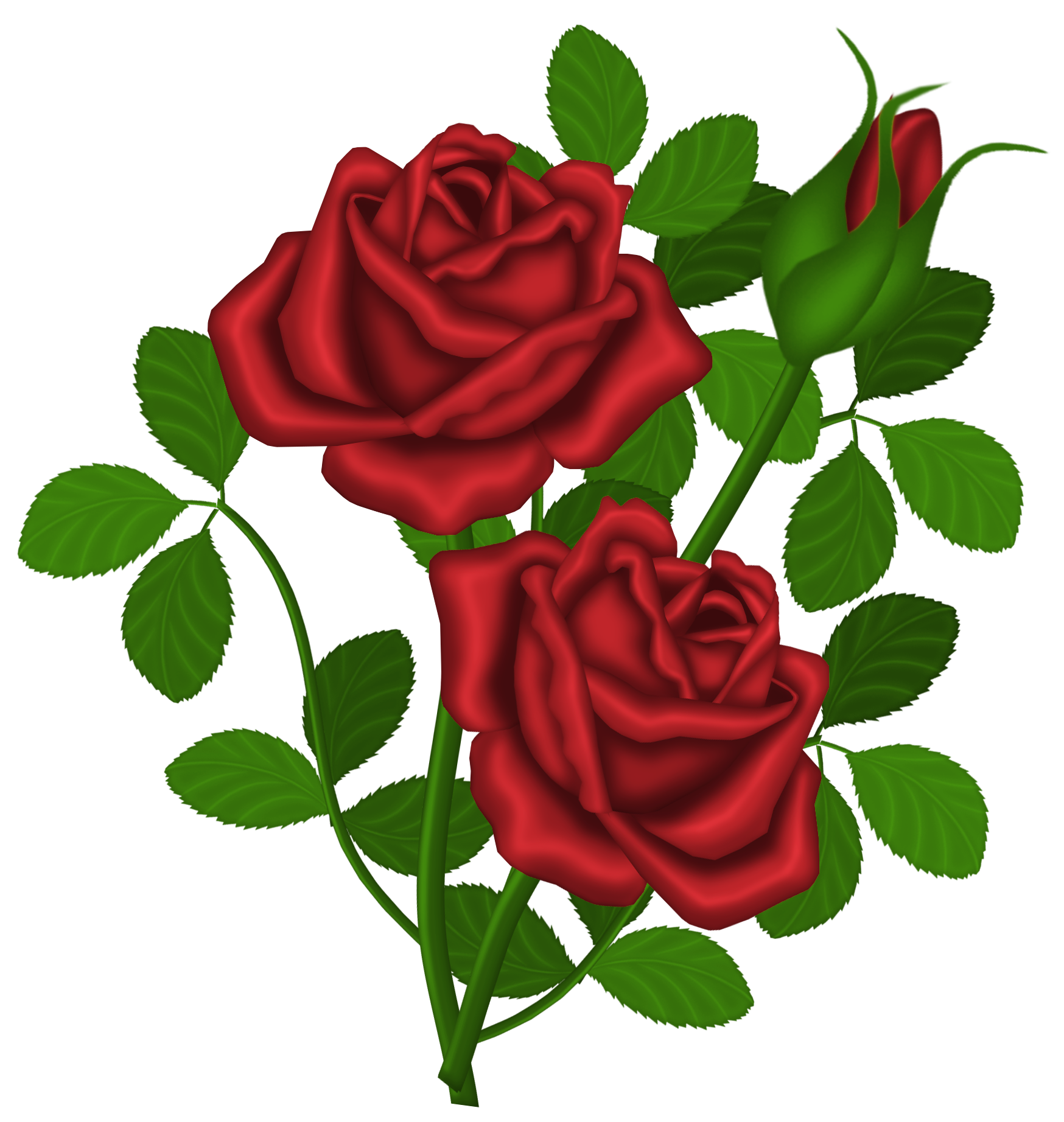 Red roses png picture. Garden clipart bush