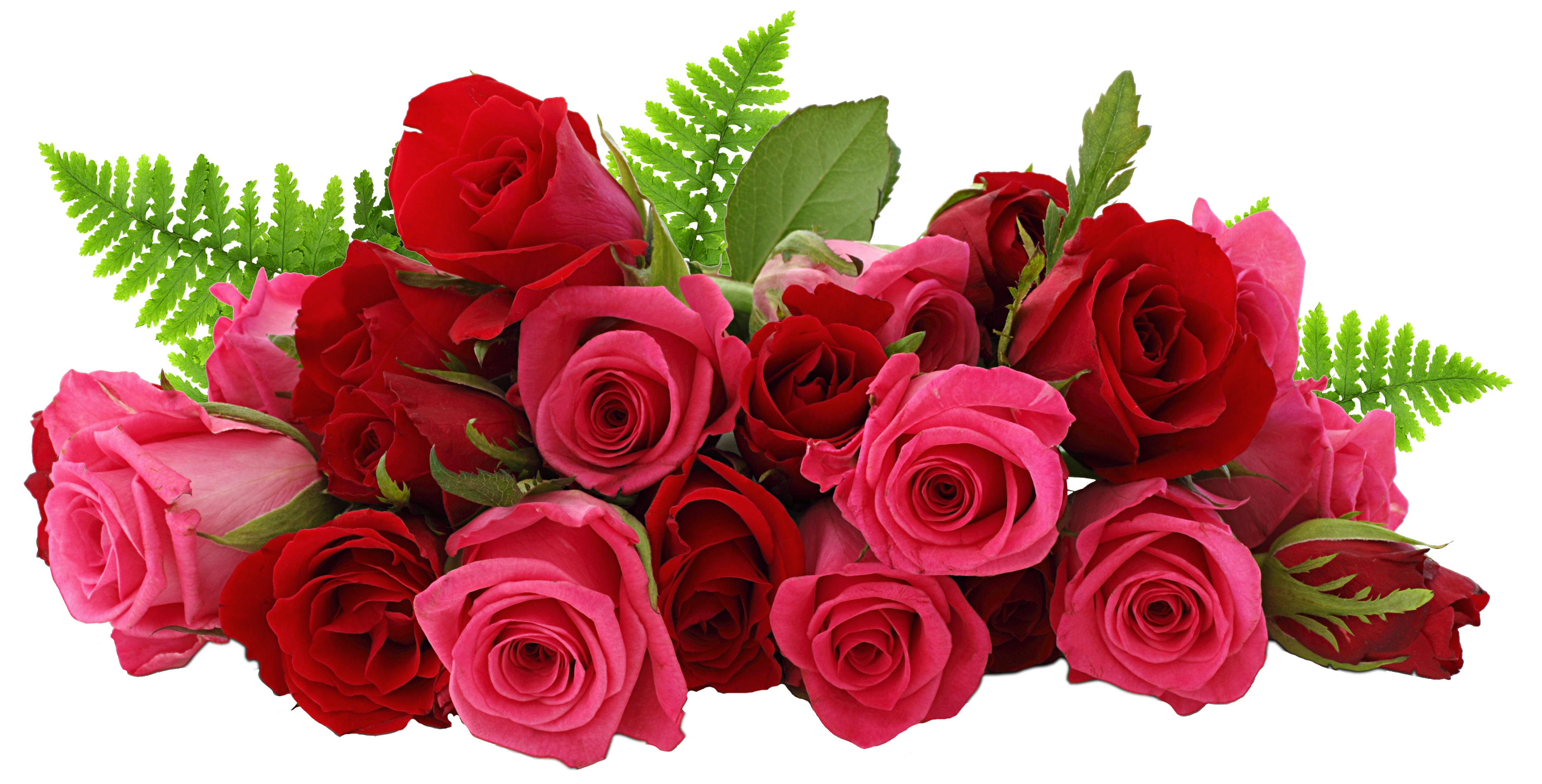 Roses png images. Red and pink picture