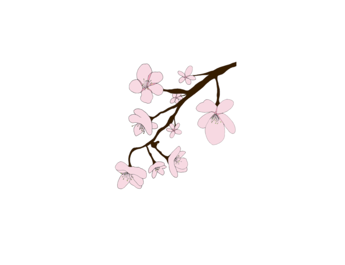 Sakura flower png. Mysoti louweaseldesigns flowers tees
