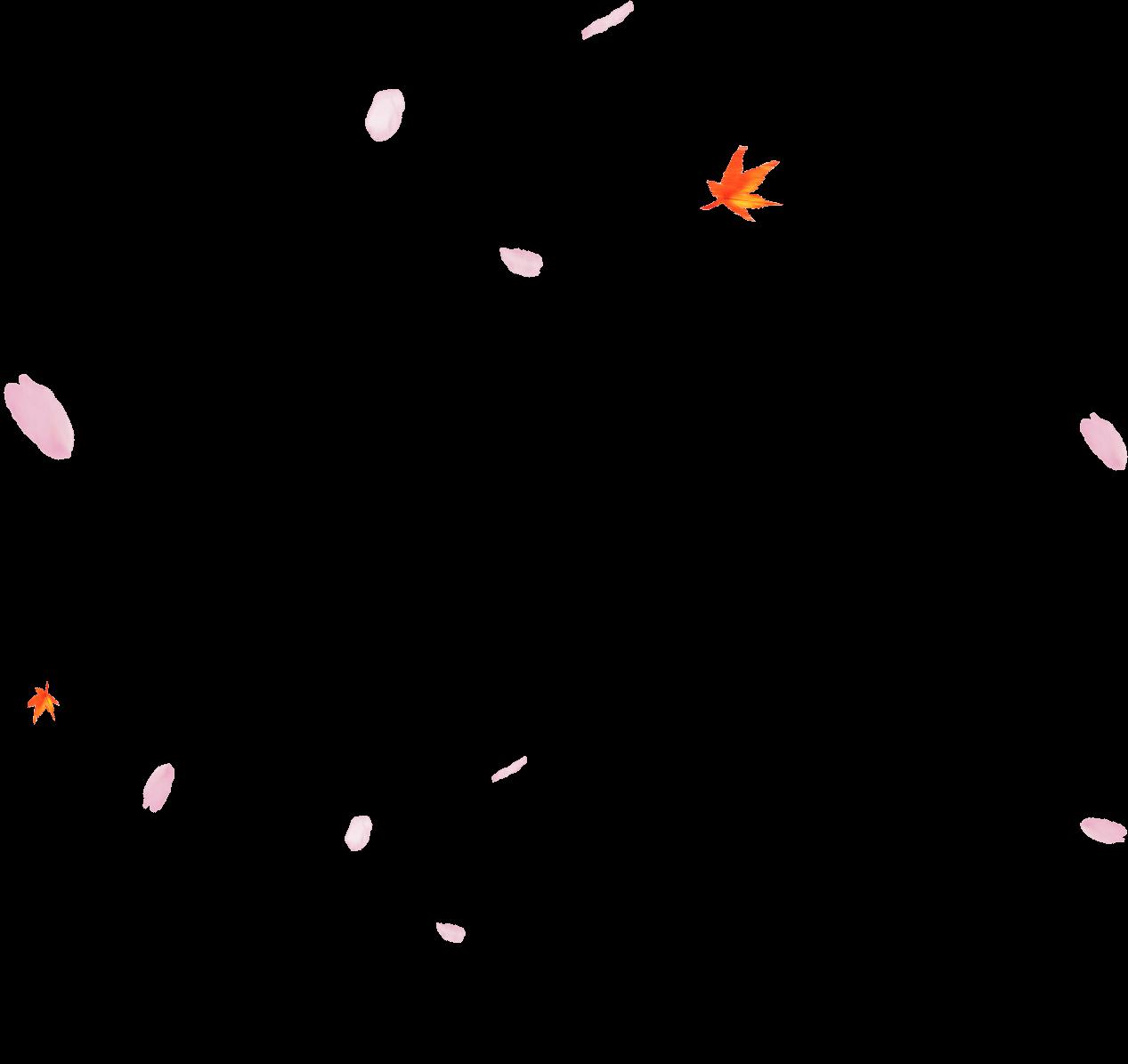 Sakura flower png, Sakura flower png Transparent FREE for ...