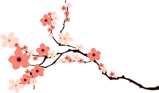 Sakura flower png. Cherry blossom hd transparent