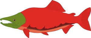 Cooked panda free images. Salmon clipart
