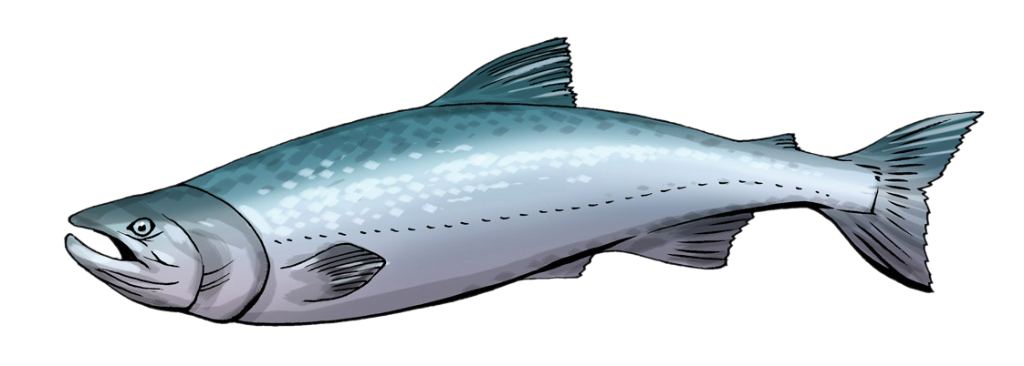 Salmon clipart. Panda free images salmonclipart